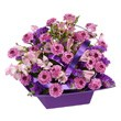 Valentine's Day Recipe #50 - Scroll down to