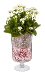 Valentine's Day Recipe #60 - Scroll down to