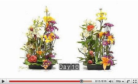 VIDEO - LEFT: Other Floral Foam, RIGHT: OASIS Floral Foam - Scroll down for VIDEO